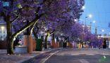 """شارع الفن"""" في أبها.. كرنفال الألوان ووجهة العائلات"""
